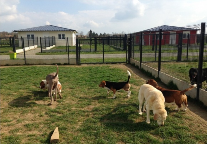 Hotel-Canin-Pension-Garde-Animaux